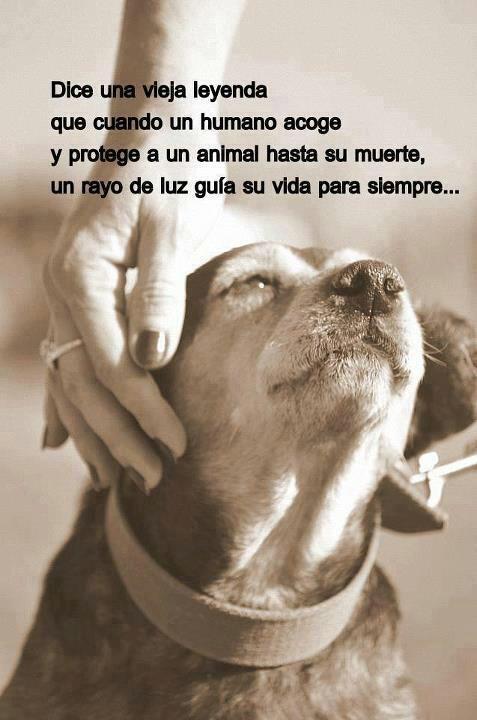 contra el maltrato animal - Marianela Garcet