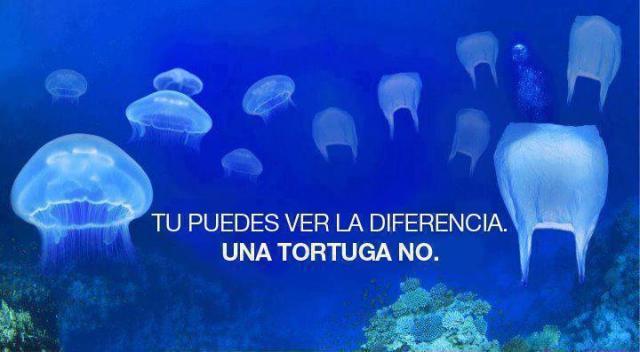 Cuida las tortugas - Marianela Garcet