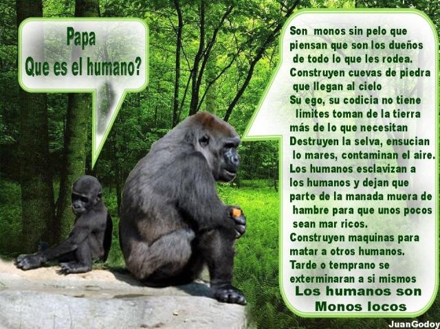 gorila - Marianela Garcet