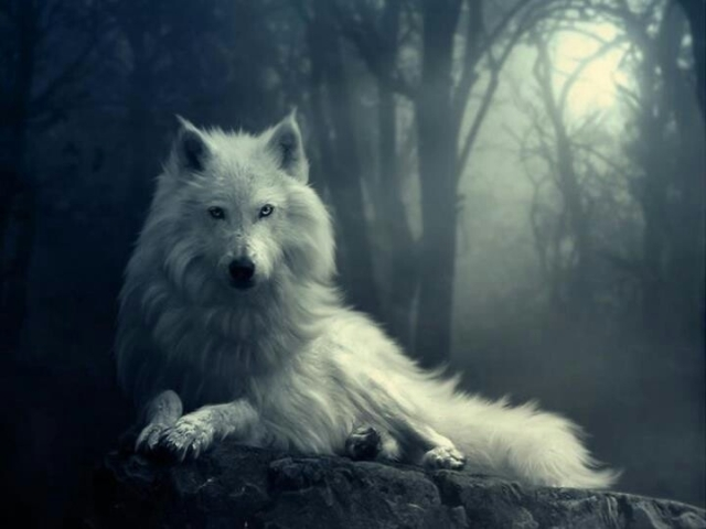 lobo - Marianela Garcet