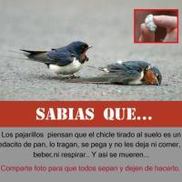 Pájaros y Chicles