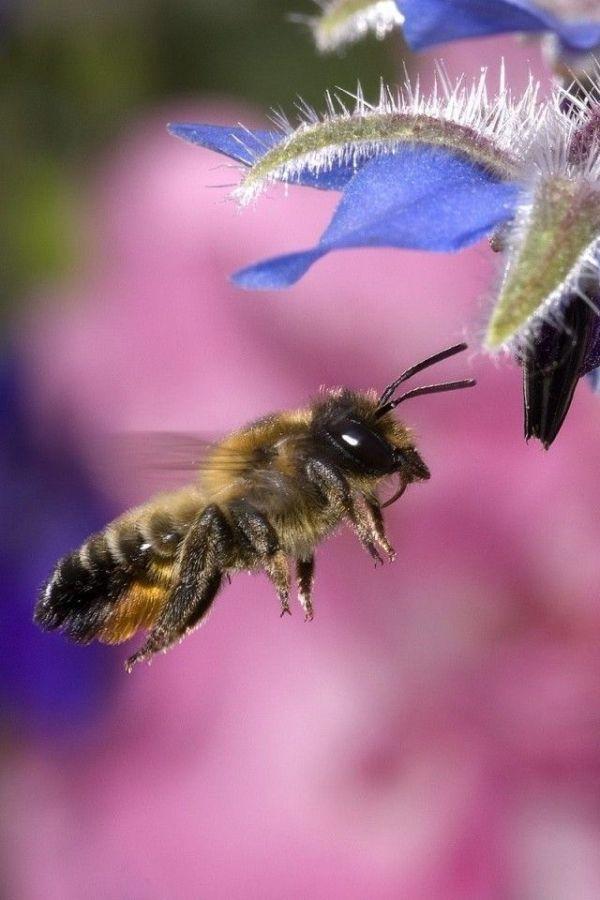 abejas1