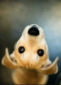 Solo un perro -2 petstars.com.ar