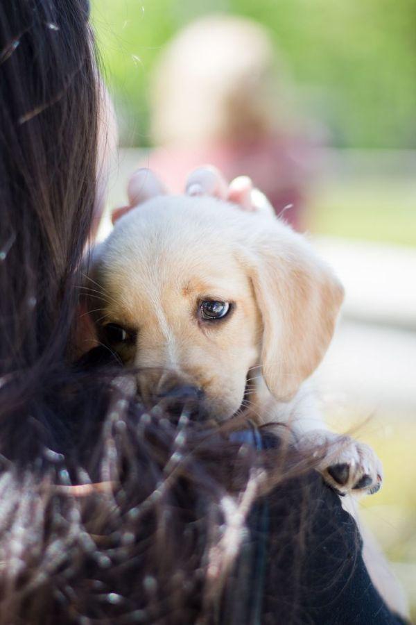 Solo un perro - petstars.com.ar