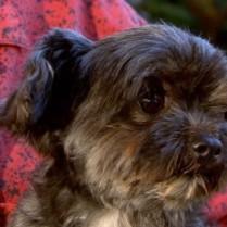perro-se-reune-con-familia-despues-de-tres-anos
