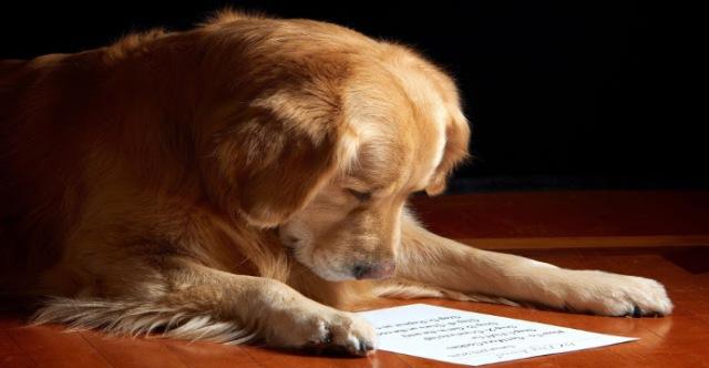 carta-de-un-perro-a-su-dueno